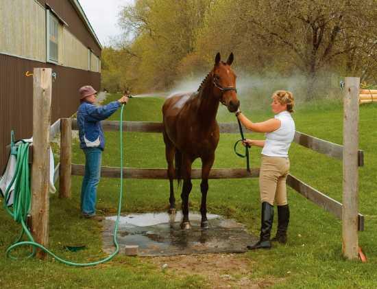 Уход за лошадями в домашних условиях